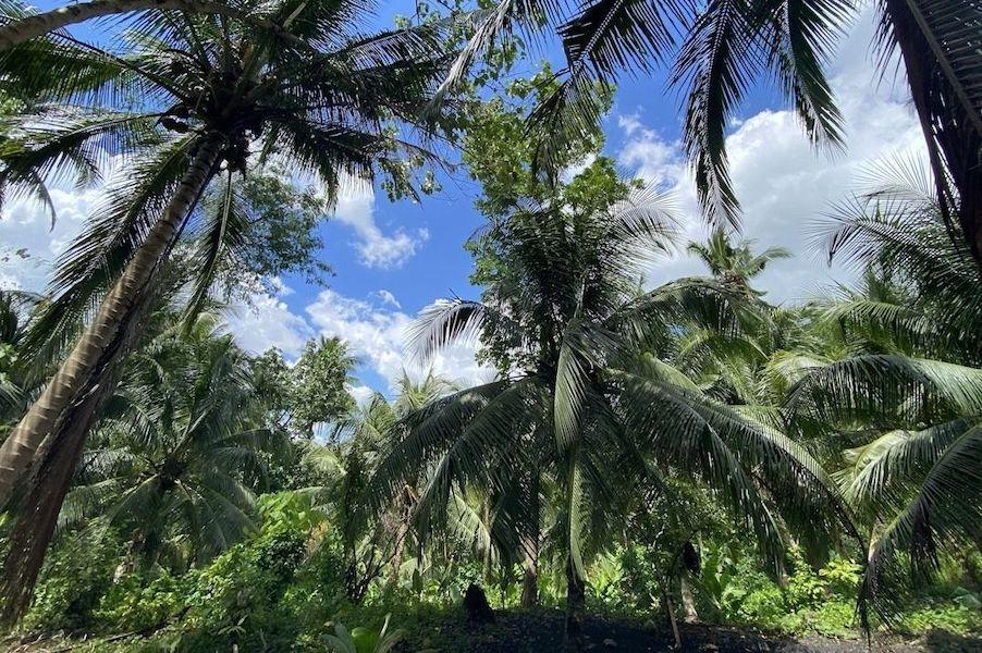 Retour sur les actions de juin aux Philippines